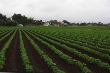 枝豆畑 -