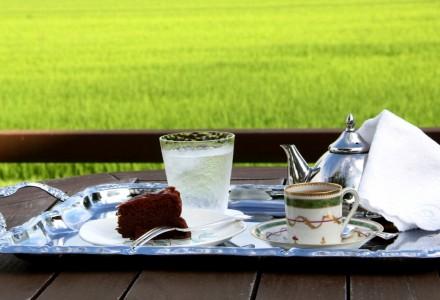 水田とお茶