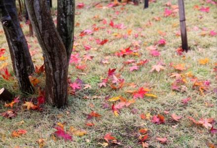 窓辺の落ち葉