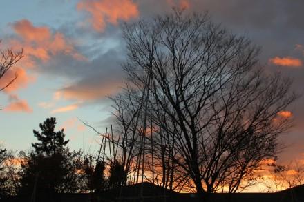 樹下美術館の夕雲