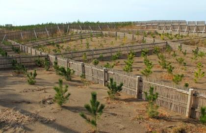 6直海浜の植栽