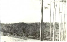 1昭和30年代広い松林
