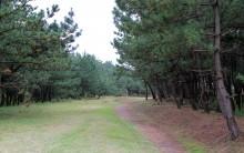 4大潟区の松林