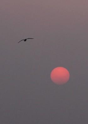 四ツ屋の初春の夕陽