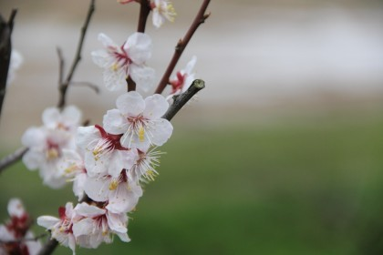 樹下美術館の梅