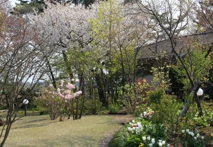 140426樹下美術館の庭