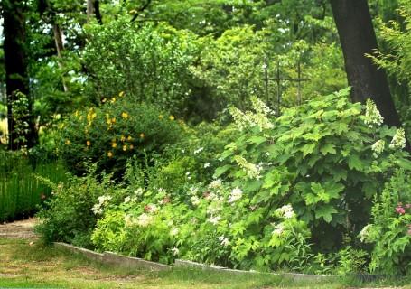 窓辺からの庭