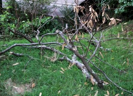 ④折れた木