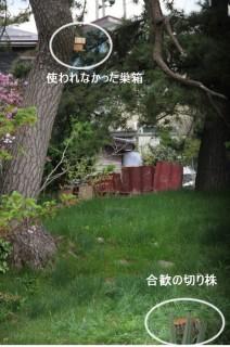 ⑤切り株と巣箱