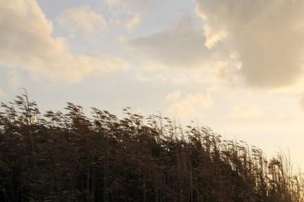 海の竹やぶ
