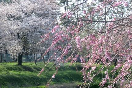 新堀川公園