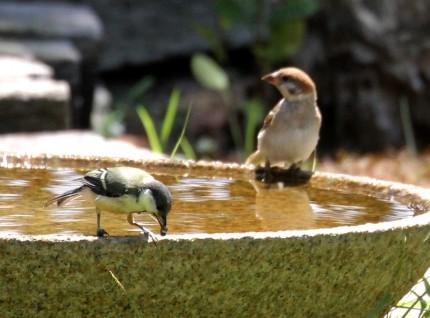 シジュウカラと雀