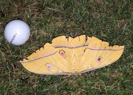151002の蛾