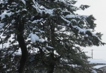 0115の雪