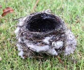 161006落ちた巣