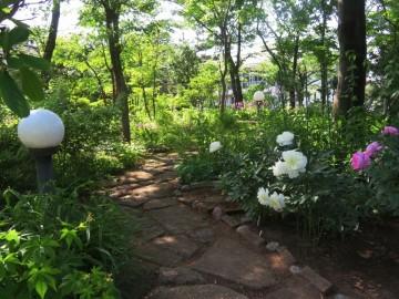 180525芍薬の庭