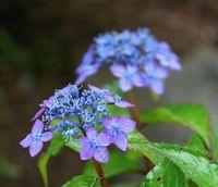 藍の空・紫姫