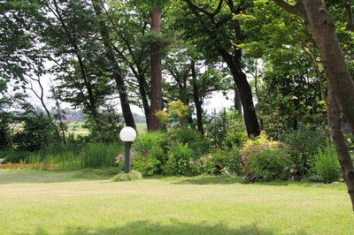 樹下美術館の庭