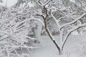 2月8日の庭