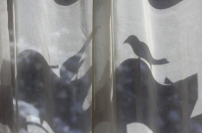 スズメの影