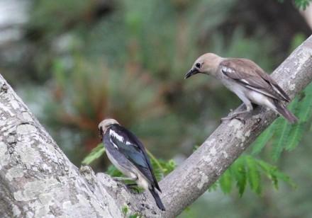 集まる若鳥たち
