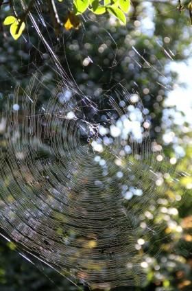 真新しい蜘蛛の巣