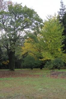 森本の晩秋