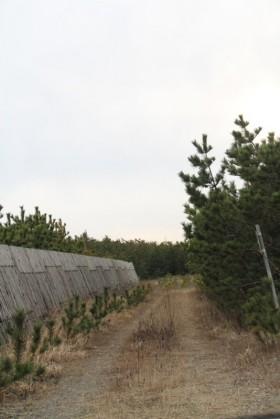 7雁子浜 の植林