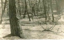2昭和30年代の松林