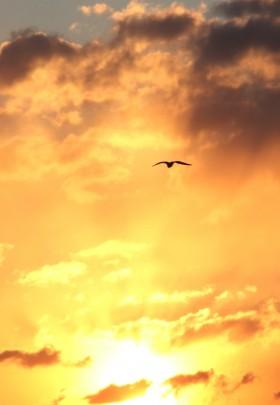 さよなら夕陽