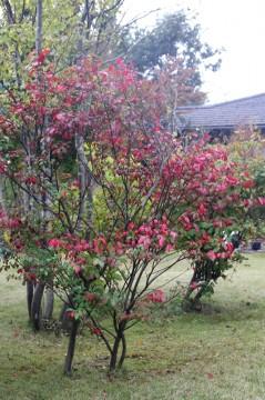 マユミの枝 (2)