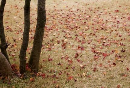 カフェの前の落ち葉