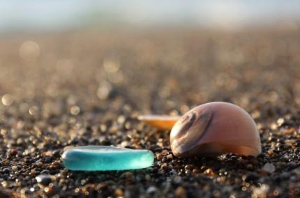 シーグラスと貝殻