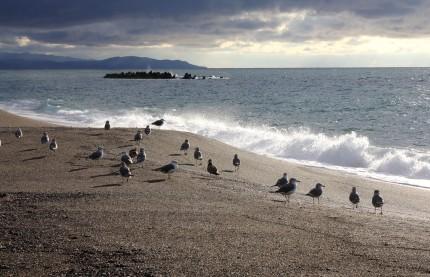 柿崎海岸のカモメ
