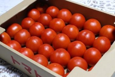 160910石田氏からのトマト
