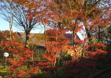 171117樹下美術館の紅葉
