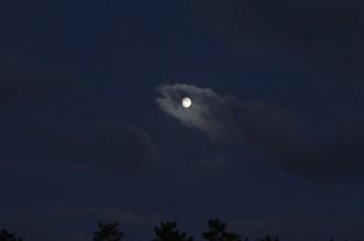 9月3日目が月の魚