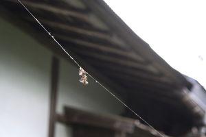 糸が一本残った