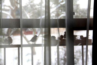 2窓辺のスズメ