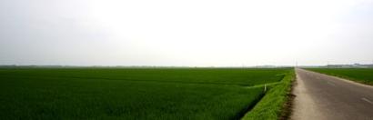 大潟区の緑の地平線