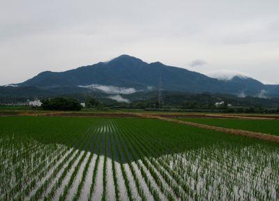 梅雨入りの米山