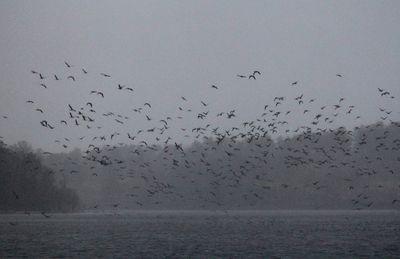 鳥たちの飛来