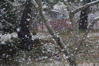 潟町の降雪