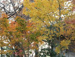 1庭の木々